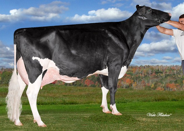 Amities Goldwyn Lover EX-91 13* (MS:92)