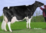 Amities Goldwyn Laurence EX 3E 5*